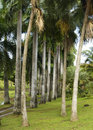 Habitation clement in martinique france the park Royalty Free Stock Photography