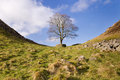 Hadrians Wall Sycamore Gap horizontal Royalty Free Stock Photos