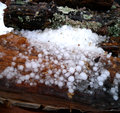 Hail on stacked firewood quarter inch laying after a freezing rain followed by Stock Image