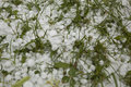 Hail Storm Disaster close up Stock Photography