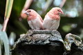 Hail to the Finches Royalty Free Stock Photo