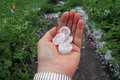 Hailstones during a violent thunderstorm produce large from heaven Royalty Free Stock Photo