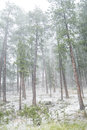 Hailstorm In The Forest