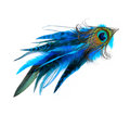 Hair accessory with peacock feathers isolated over white Royalty Free Stock Photo