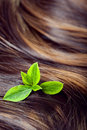 Hair care concept beautiful shiny hair with highlights and gree healthy highlighted golden streaks green leaves closeup shot Royalty Free Stock Image