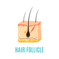 Hair follicle icon
