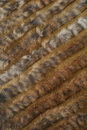 Hair furry woven Royalty Free Stock Photos