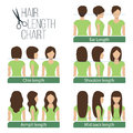 Hair length chart Royalty Free Stock Photo