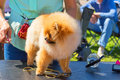 Haircut dogs professional master