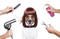 Hairdresser dog Royalty Free Stock Images
