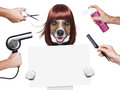 Hairdresser dog Stock Photos