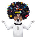 Hairdresser dog with curlers afro look very big curly black hair and hair rollers Stock Photography