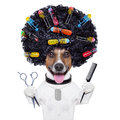 Hairdresser dog with curlers afro look very big curly black hair scissors and hair comb hair rollers Royalty Free Stock Photography