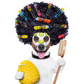 Hairdresser dog with curlers afro look very big curly black hair scissors and hair comb hair rollers Stock Photo