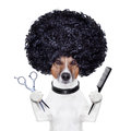 Hairdresser  scissors comb dog Royalty Free Stock Photo