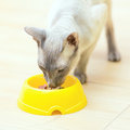 Hairless Cat Eating Royalty Free Stock Photos