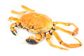Hairy crab Stock Images