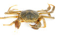 Hairy crab Royalty Free Stock Photo