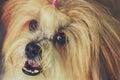 The hairy dog little cute Stock Photos