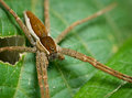 A hairy spider alone on a leaf Royalty Free Stock Photo