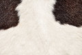Hairy texture of cow Royalty Free Stock Photography