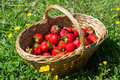 Half a basket of strawberries Royalty Free Stock Photo