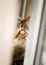 Half cat portrait the is looking at c�mera Royalty Free Stock Photos