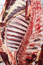 Half of a cow carcass hanging on a butcher freshly cut showing the ribs and spine Royalty Free Stock Images