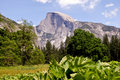 Half dome at Yosemite Stock Images