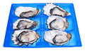 Half a dozen oysters in blue box isolated on white background Stock Photos