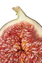 Half fresh fig with seeds Stock Image