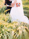 Half-length portrait of bride and groom posing in a sunflower sunny field. Wedding concept Royalty Free Stock Photo