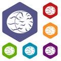 Half of nutmeg icons set hexagon