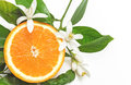 Half Orange Fruit with leaves and blossom isolated on white back Royalty Free Stock Photo