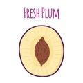 Half of ripe purple plum. Cartoon flat style. Vector illustration