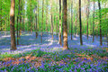 Hallerbos 2 Royalty Free Stock Photo