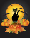 Halloween Black Cat On Carved Pumpkin Illustration Royalty Free Stock Photos