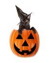 Halloween Black Cat In A Jack-O-Lantern Royalty Free Stock Photo