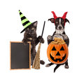 Halloween Cat and Dog Blank Chalkboard