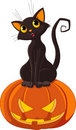 Halloween Cat on pumpkin Stock Photos