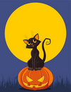 Halloween Cat on pumpkin Royalty Free Stock Photos