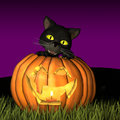 Halloween Cat with Pumpkin Stock Image