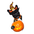 Halloween dog  banner Royalty Free Stock Photo