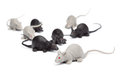 Halloween group of toy mice on white background series themed pictures Stock Photo