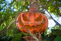 Halloween jack o lantern hidden behind tree branches Stock Photography
