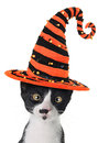 Halloween kitten cross eyed wearing a witch hat Royalty Free Stock Photo