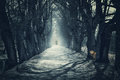 Halloween mystical background with dark forest Royalty Free Stock Photo