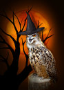 Halloween Owl with hat Royalty Free Stock Photo