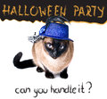 Halloween party banner funny edgy jumpy siamese hilarious cat humor Stock Image