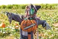 Halloween Party Celebration With A Close Up Of A Fun Friendly Green Face Witch Scarecrow In A Pumpkin Patch With Pumpkin Patch Sig